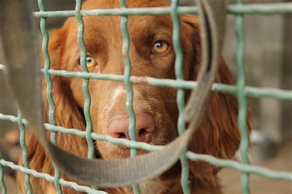 Cani trovati in condizioni di degrado