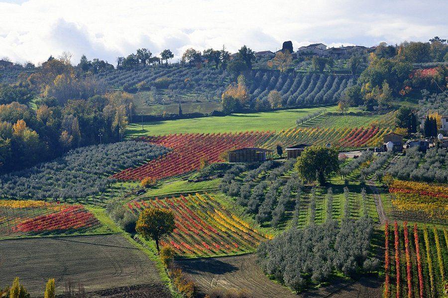 Danni fino all'80% per la produzione vitivinicola a causa delle gelate