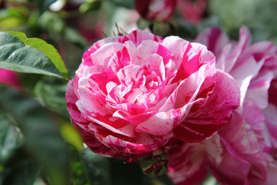 Perugia Flower Show 21