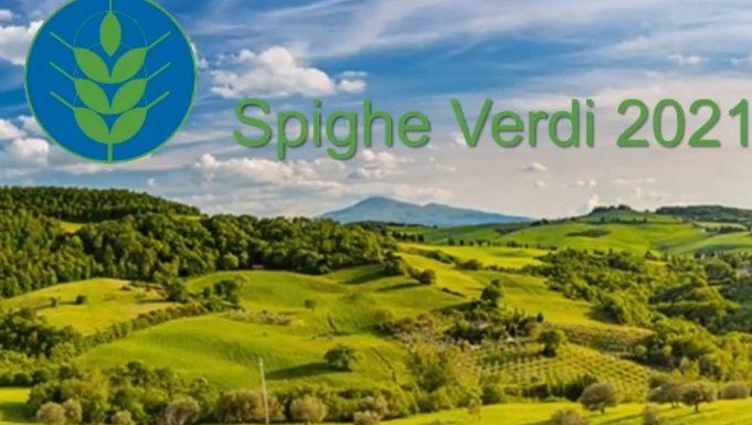 Spighe Verdi
